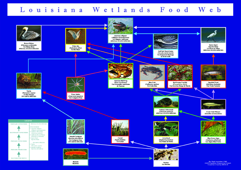 foodweb LA wetlands educational poster