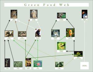 foodweb rainforest educational materials