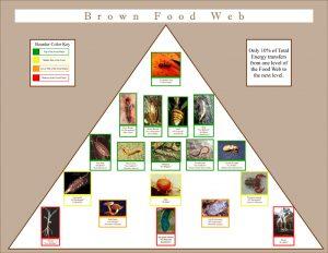 foodweb rainforest poster graphic design