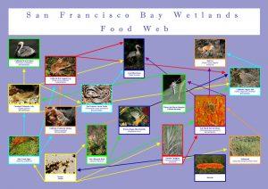 foodweb san francisco wetlands graphic design