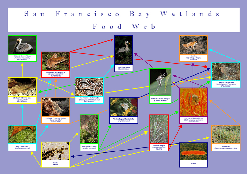 foodweb san francisco wetlands graphic design