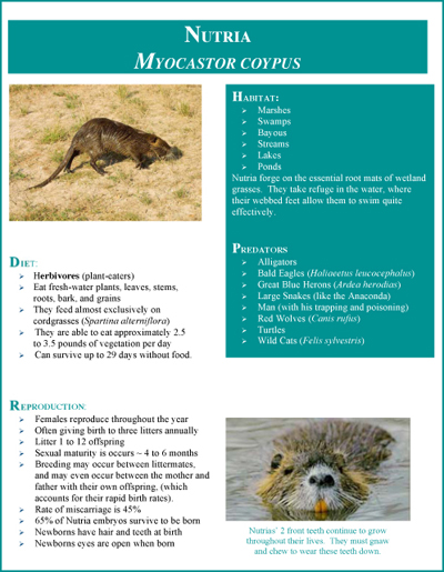 nutria fact sheet