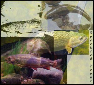 wetland wildlife poster