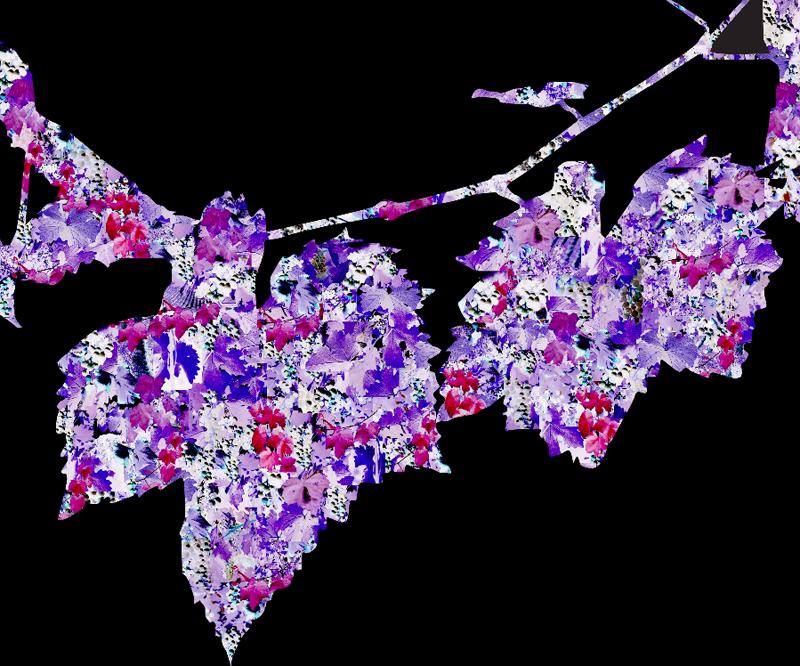 Wine Vine Essence | Digital Art | Susan Searway-Fertig