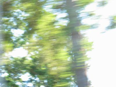 Landscape Trees 4