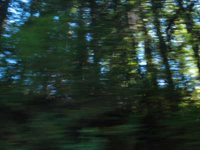 Landscape Trees 1