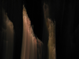 Night Trees 13