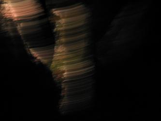 Night Trees 7
