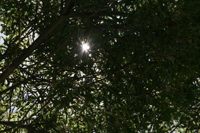 Trees 28