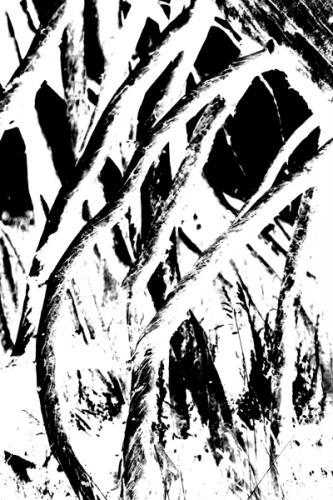 Trees 27
