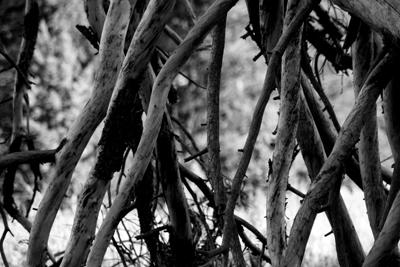 Trees 26