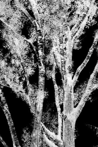 Trees 9