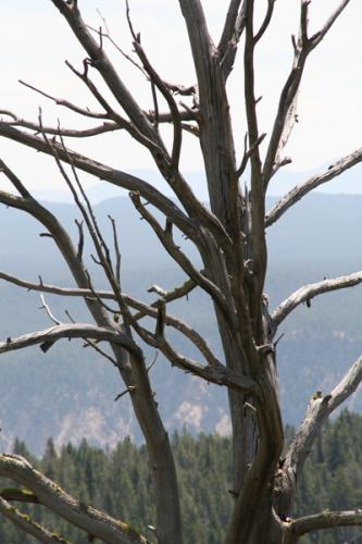 Trees 22