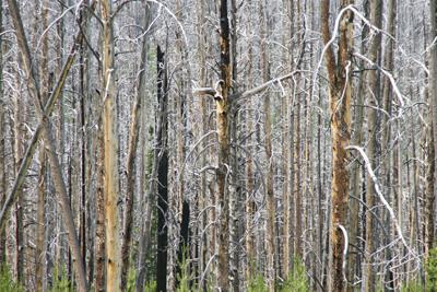 Trees 25