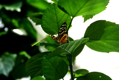 Key West Butterfly Center 12