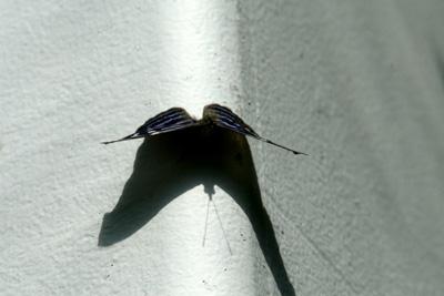 Key West Butterfly Center4