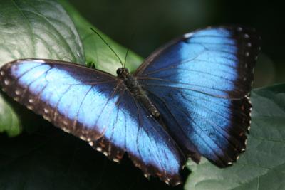 Key West Butterfly Center 3