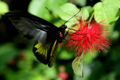 Key West Butterfly Center 5