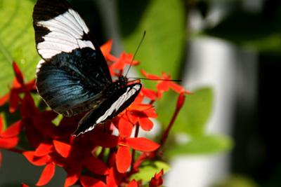 Key West Butterfly Center 7