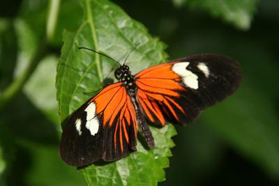Key West Butterfly Center 6