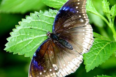 Key West Butterfly Center 13