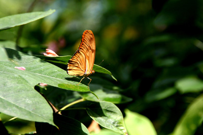 Key West Butterfly Center 11