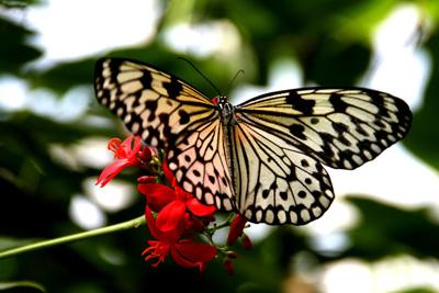 Key West Butterfly Center 9