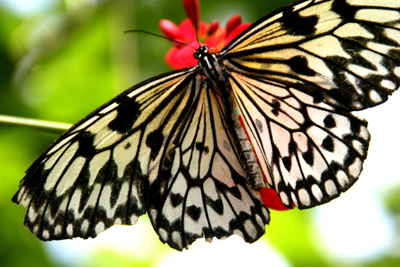 Key West Butterfly Center 2