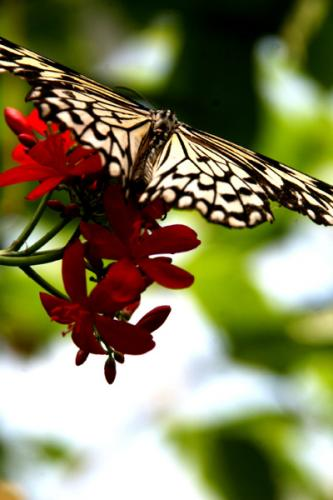 Key West Butterfly Center 1