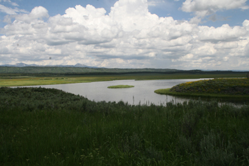 Montana 21