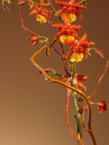 Orchids 9