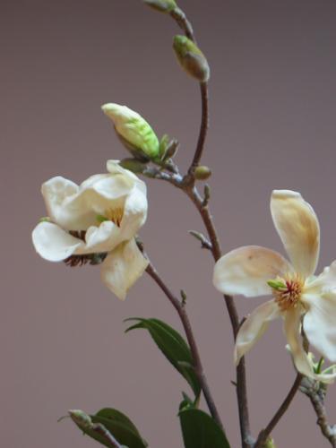 Orchids 10